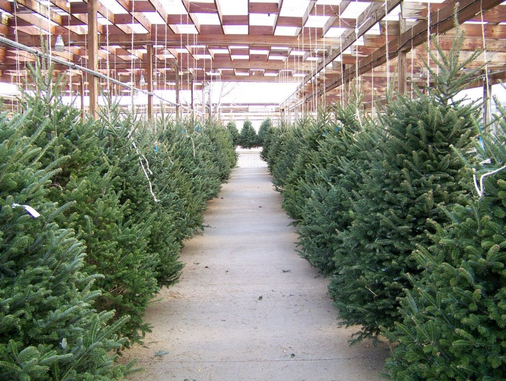 Where to buy a Christmas tree, real or fake, in Tuscaloosa