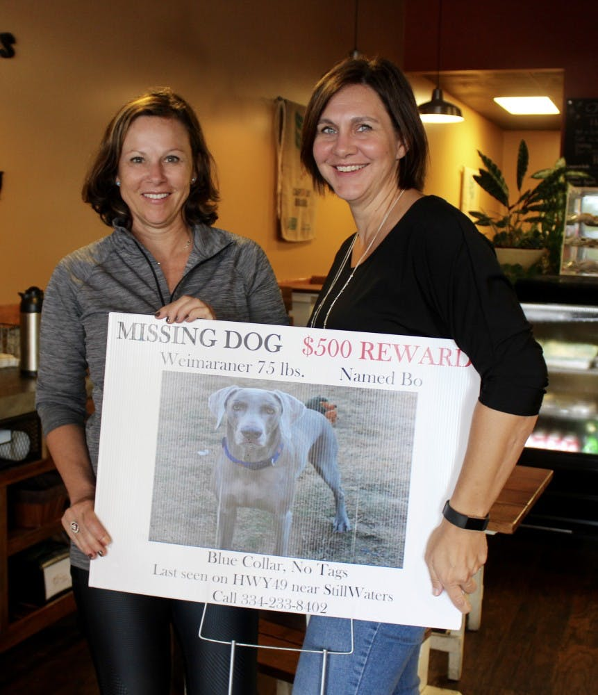 Local community members help bring home lost pets