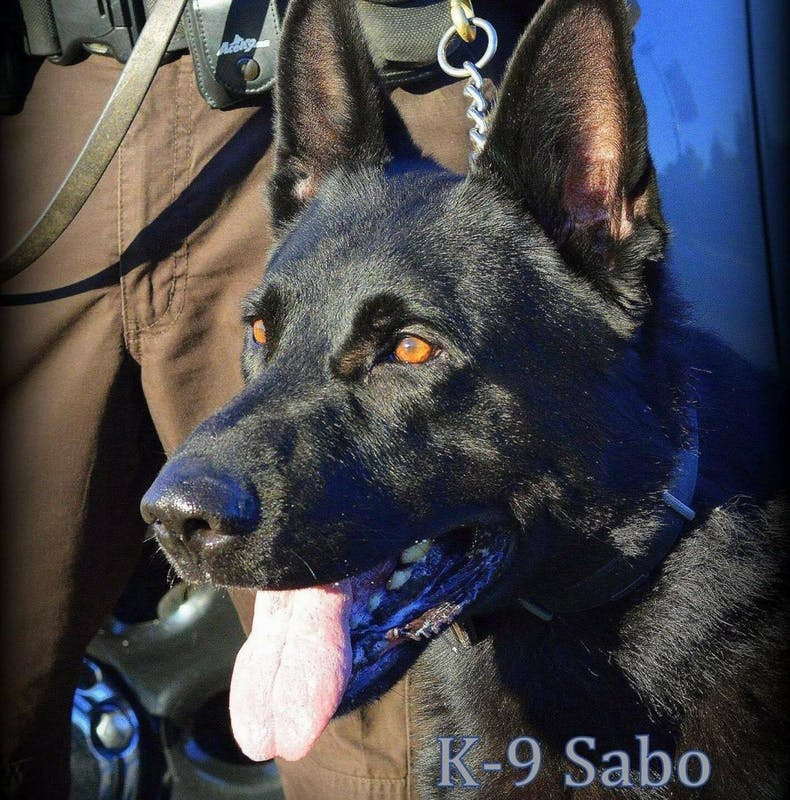 Delaware County Sheriff's Deputies say goodbye to K-9 Sabo