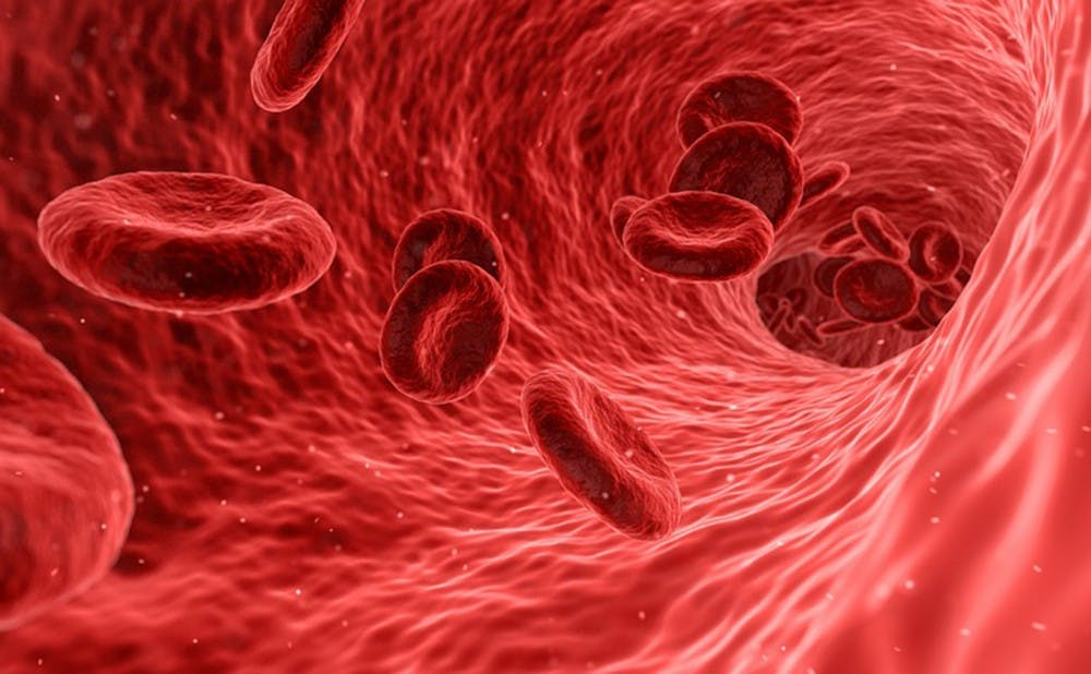 Duke Researchers Create Working Muscle Tissue Out Of Stem Cells