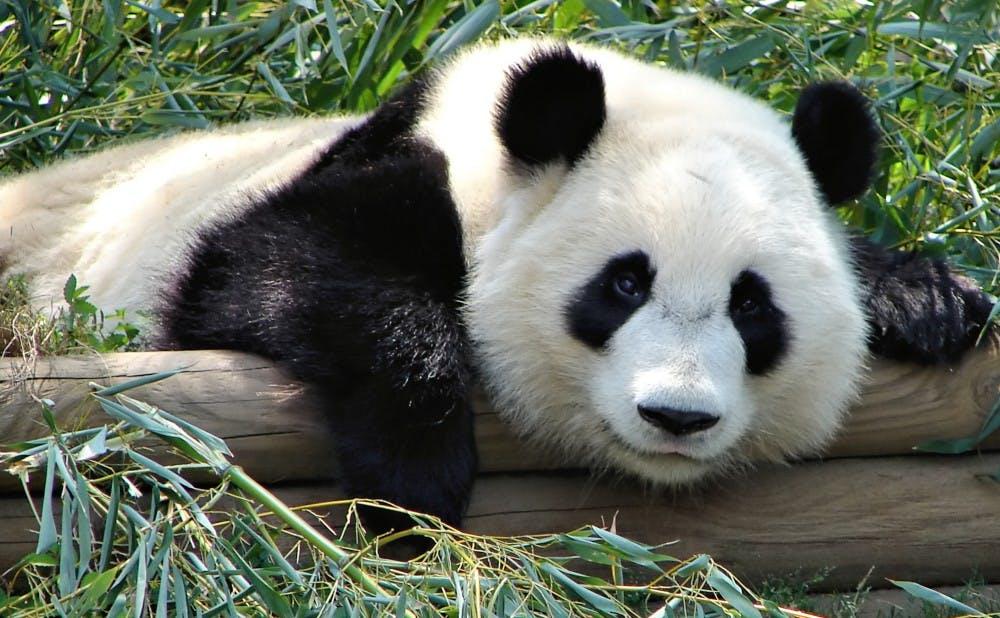 Panda_Special