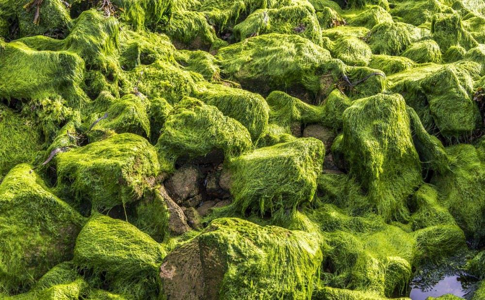 algae-2484265_1920
