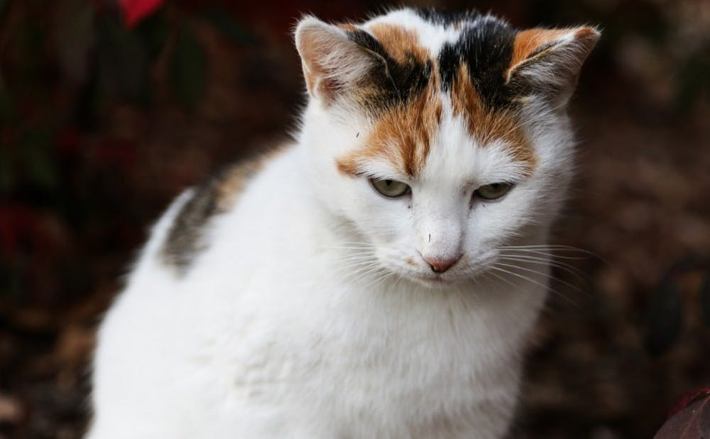 The adventures of Peaches: From shy cat to campus icon