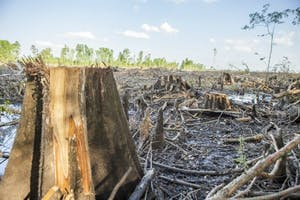 A wetland clearcut in Eastern NC from where Enviva sources wood. Photo courtesy of Rachel Weber.