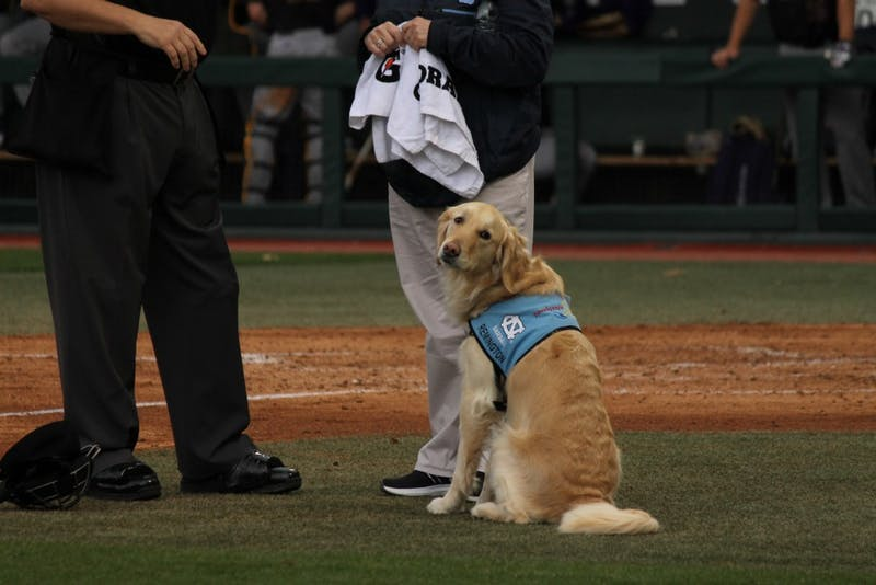 REMINGTON, UNC baseball's service dog, sits on the field during a Feb. 25 game against East Carolina.