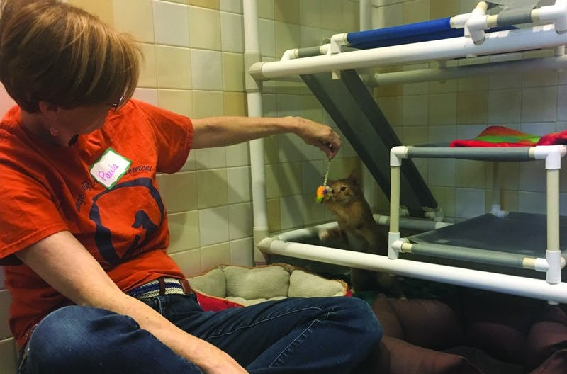 Paula Greeno, a volunteer at the Orange County Animal Shelter, entertains a kitten on Tuesday afternoon.