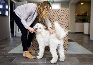 GVL / Emily FryeAshleigh Fanning plays with her dog Penny on Friday August 4, 2017.