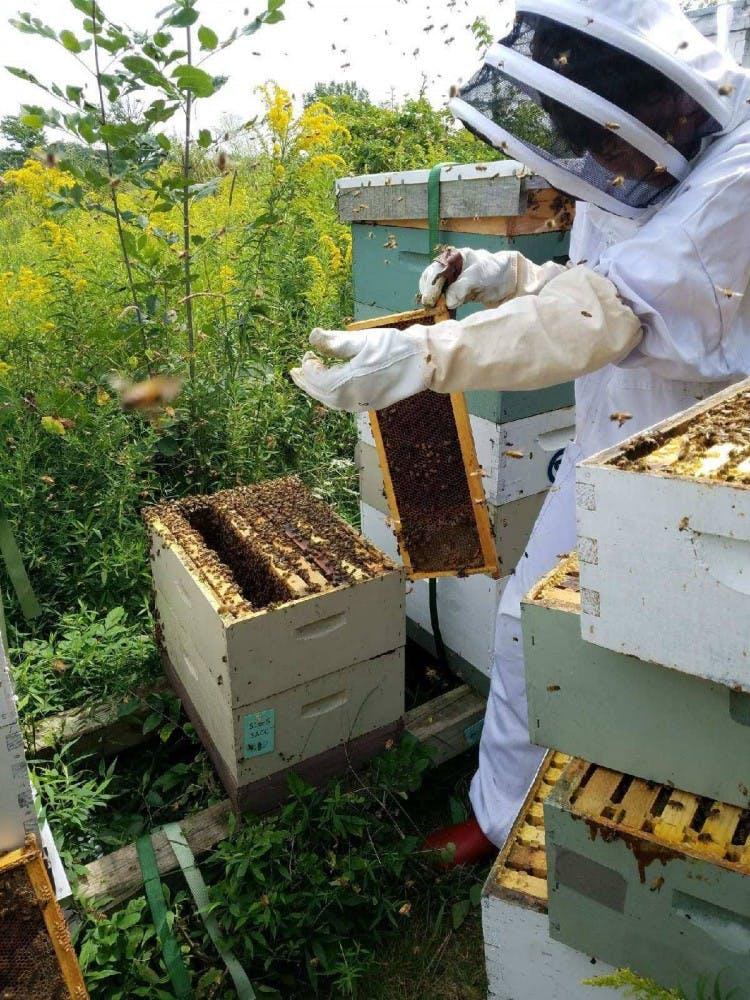BeeKeeping_RGB01