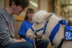 Little Man is an all-white miniature pony. Animals were delivered to local areas, like the LGBTQ+ Culture Center, to raise money for the Monroe County Humane Association.​
