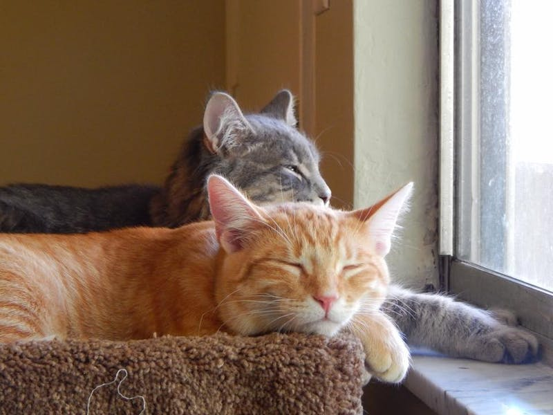 Rubeus and Vincent spend most of their time either fighting or laying at the window. Outside, they can watch birds making a nest in the tree.