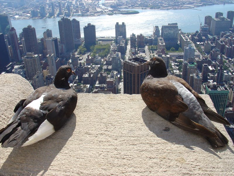 PUBLIC DOMAIN Cities are responsible for an increase in evolutionary rates in animals from birds to bugs.