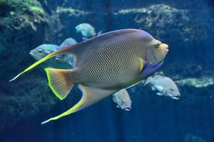 PUBLIC DOMAIN Fish have a neurochemistry similar to humans and illustrate signs of depression.