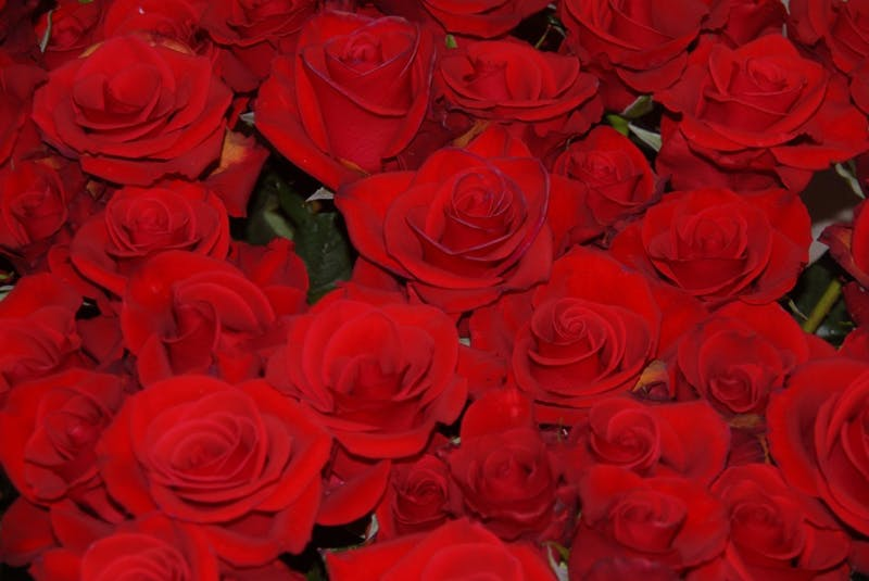 EISTRETER/CC BY-SA 3.0 The rose is a common trope in the TV show The Bachelor. which is now in its twenty second season.
