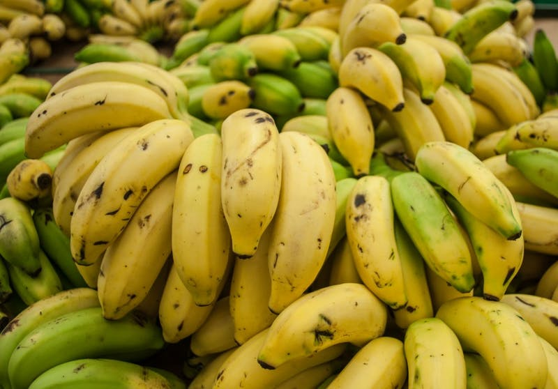 CC-BY-4.0 The fungus Fusarium wilt is killing off the Cavendish variety of banana in Australia and Asia.