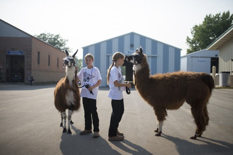 Identical twins Amanda and Ashley Overgaauw pose with their llamas before competing at the Minnesota State Fair on Thursday, August 31, 2017.
