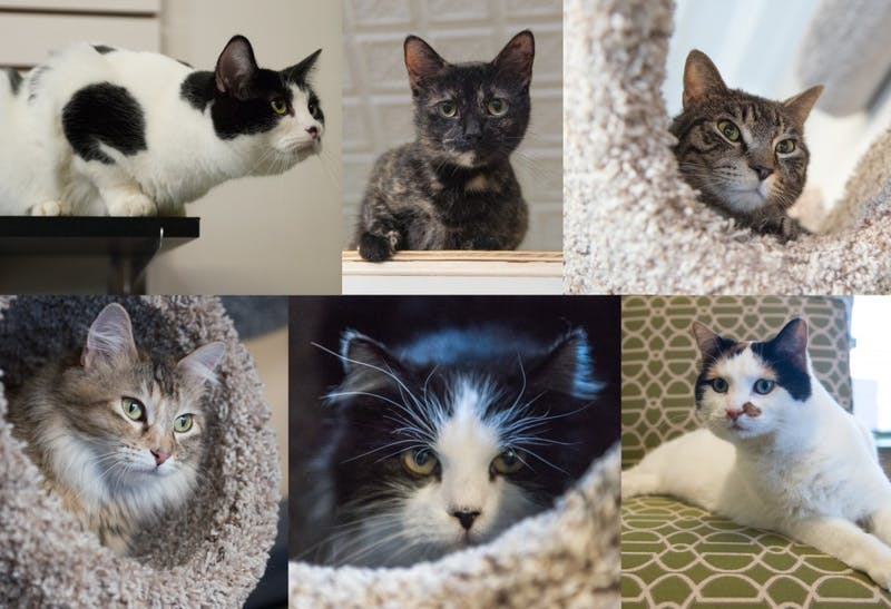 Clockwise from top left: Annabelle, Presley, Dillanger, Tinkerbell, Nana, Thea