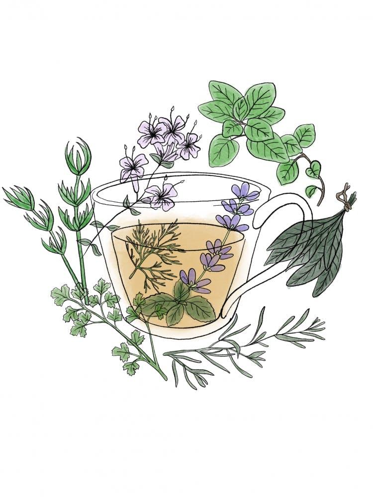 Herbal medicine workshop to teach flu-fighting tips