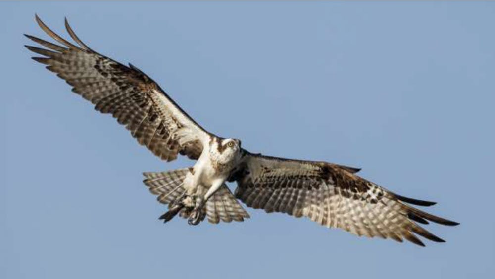 Athens County man convicted of killing osprey