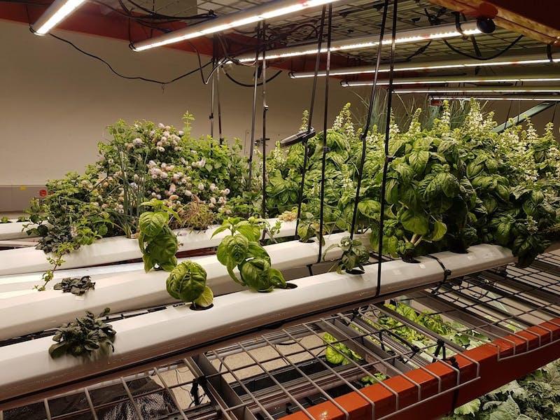 Princeton Vertical Farming