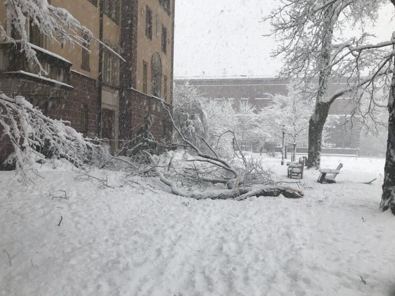 A tree fell on campus after the recent Nor'easter.