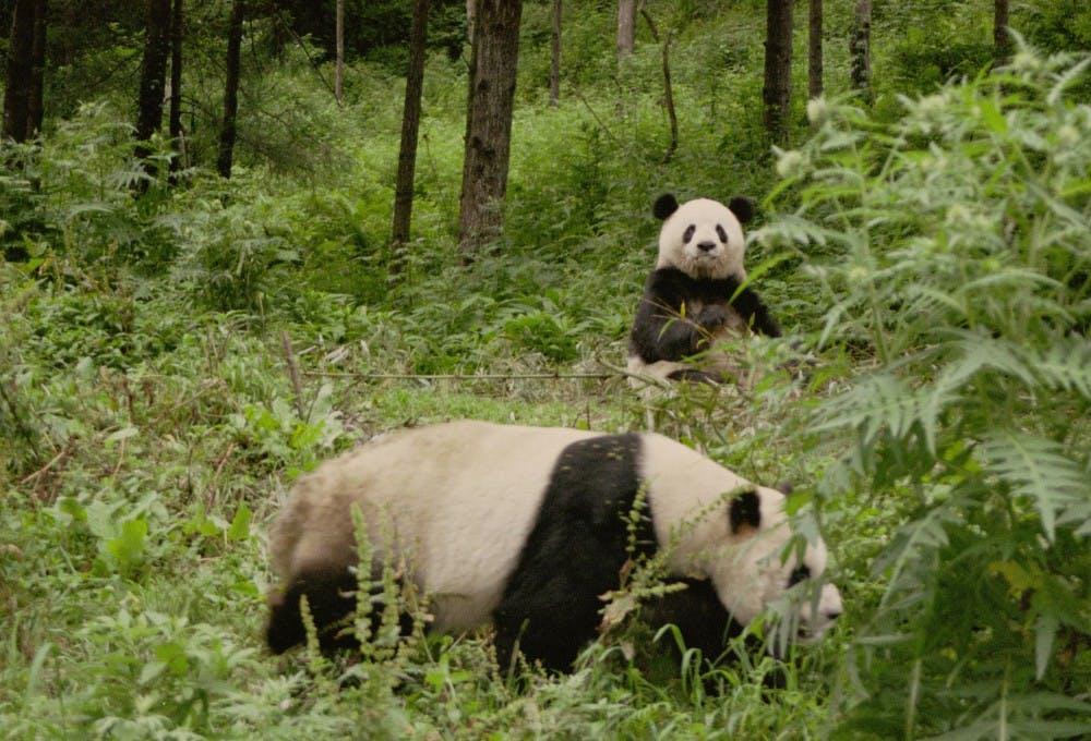 2 pandas