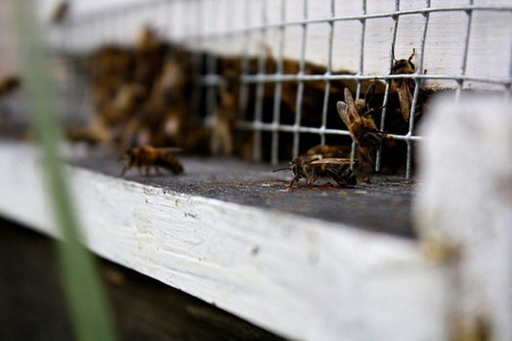 Beekeeping society grapples with tough winter for AU bees