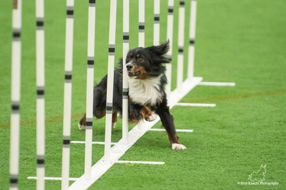 Professor, service dog travel world to compete in agility competitions