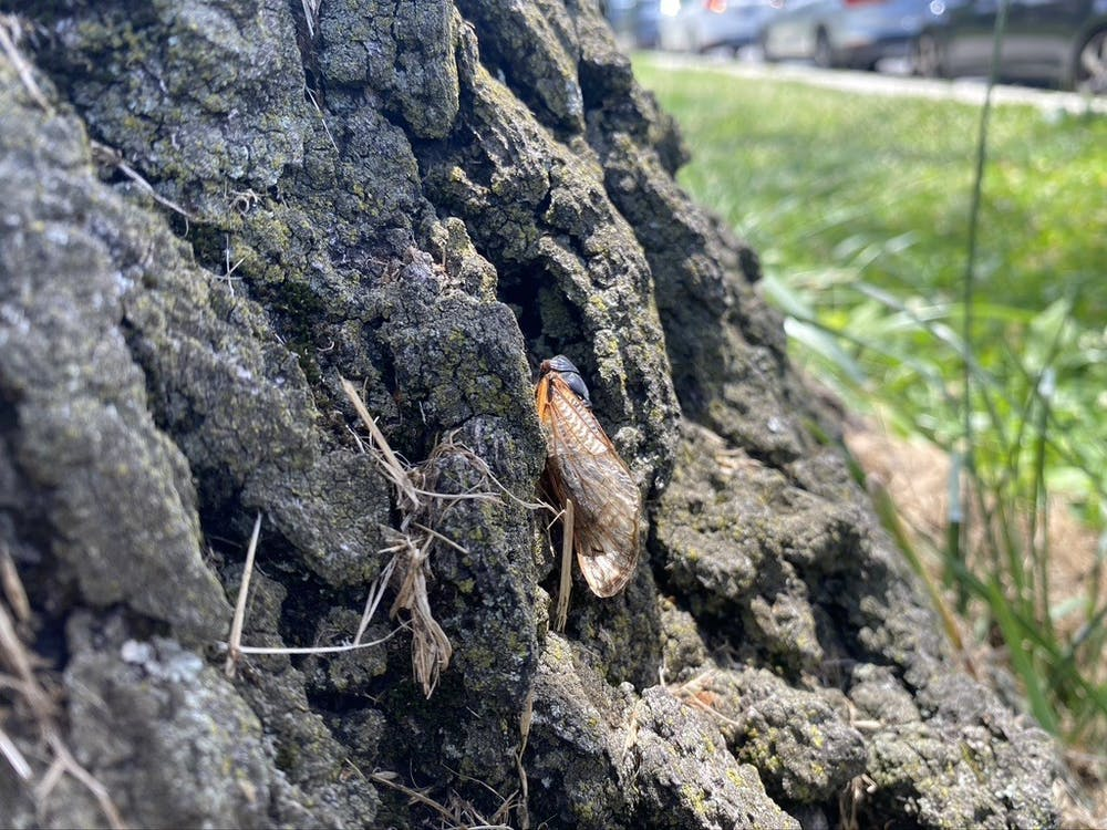DC deals with a massive cicada invasion for the first time in 17 years