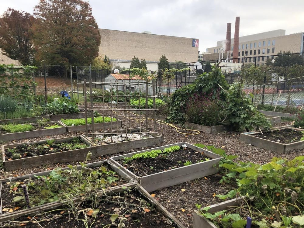 Club Feature: The AU community garden provides a space for students to connect with the environment