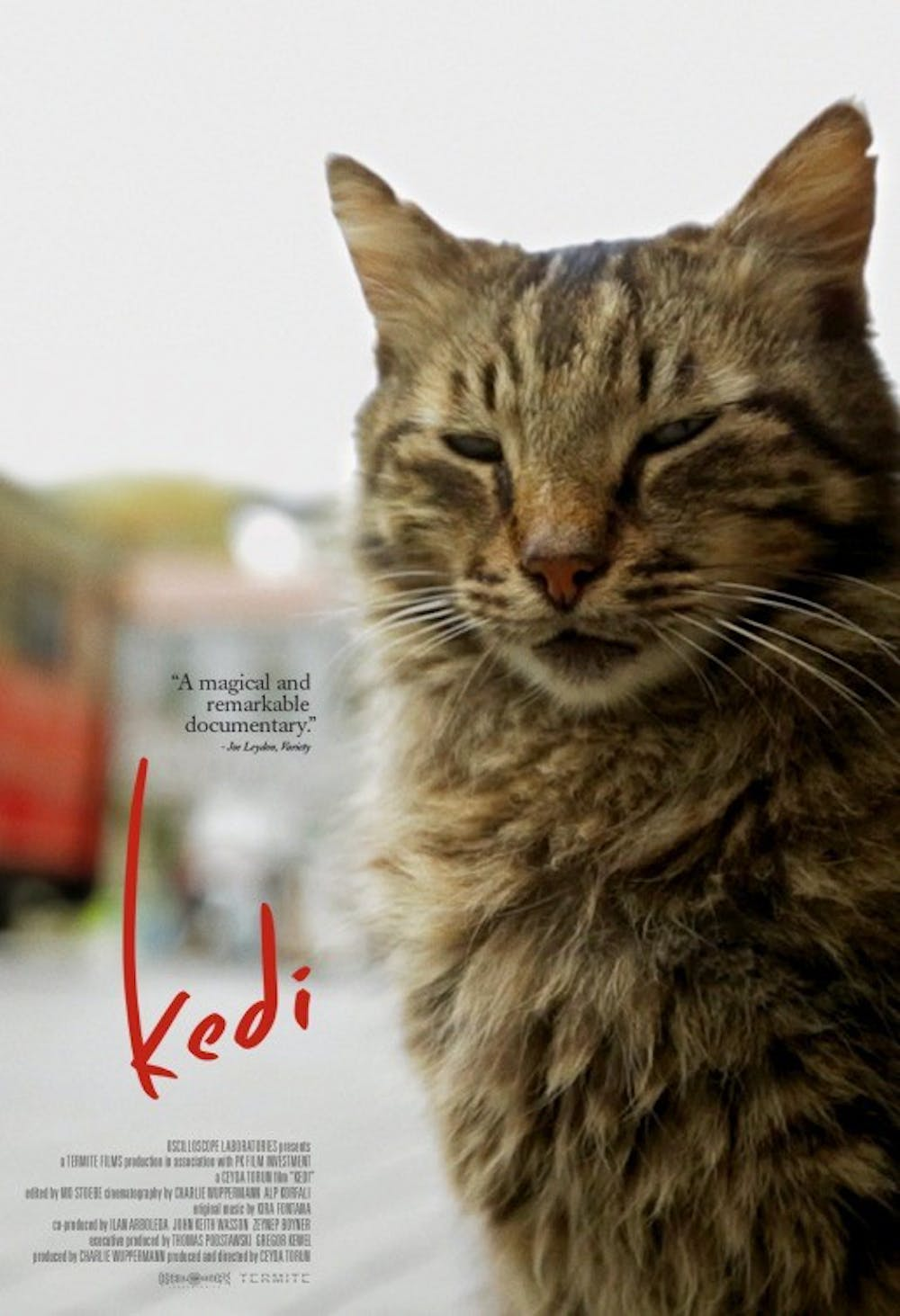 """""""Kedi"""" captures intimate relationships between cats and humans"""