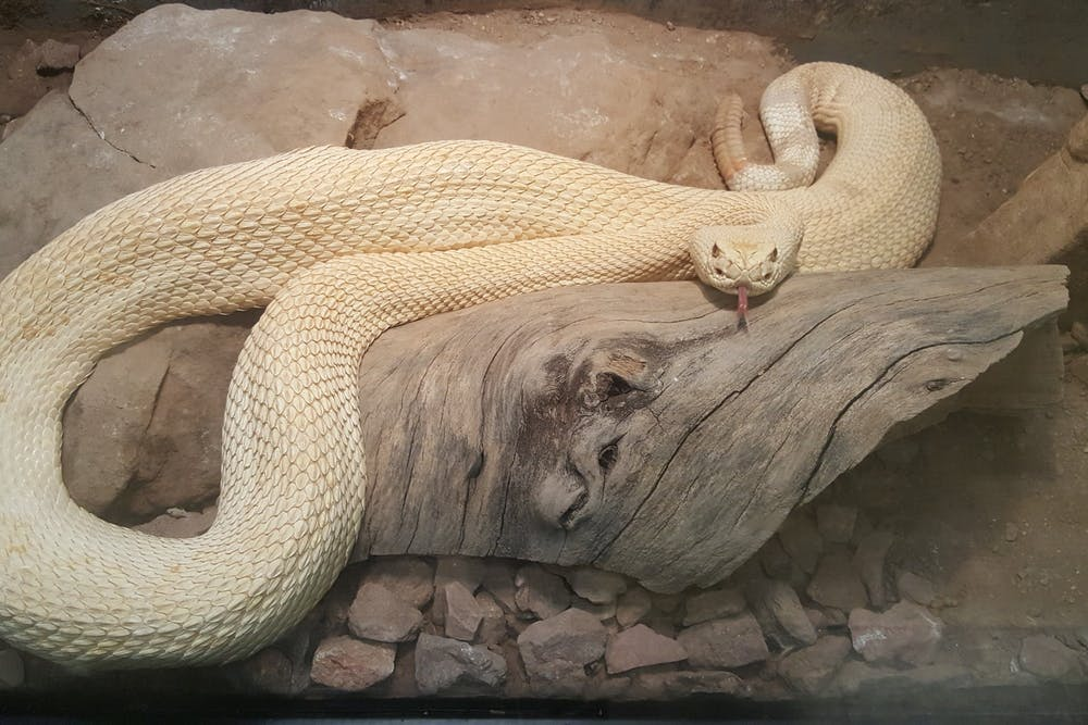 undated-hector-the-snake