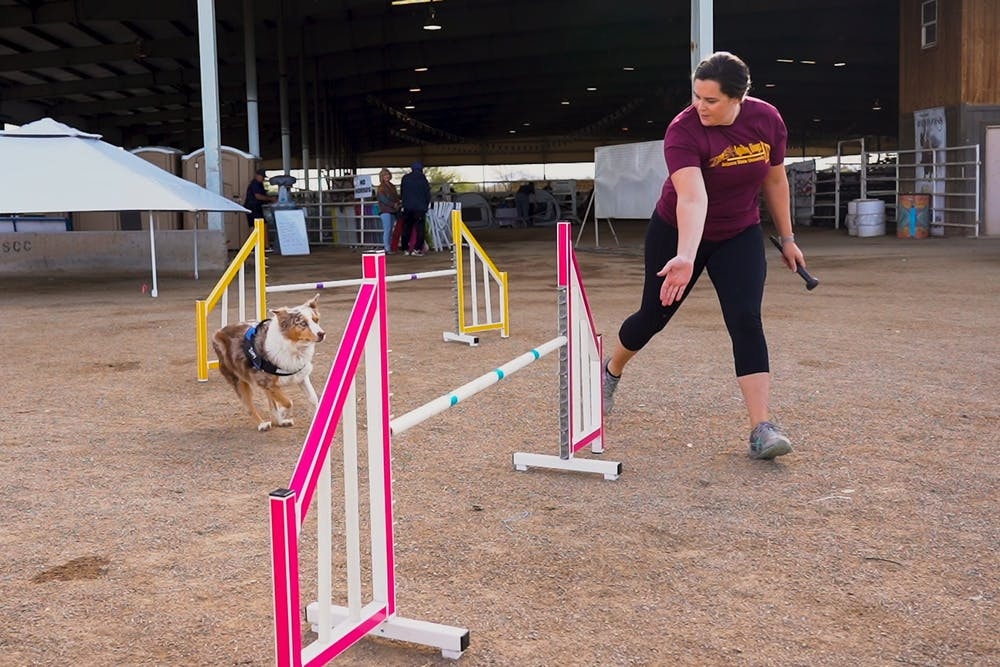 agility-dogs-2