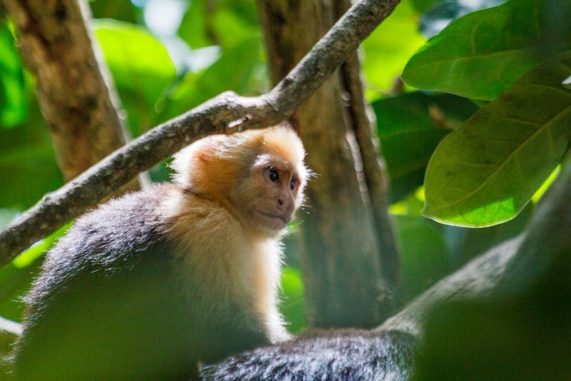 Wild monkeys make sharp stone tools, but they might not realize it, scientists say