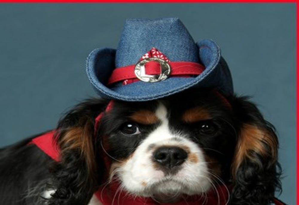 dog-hat