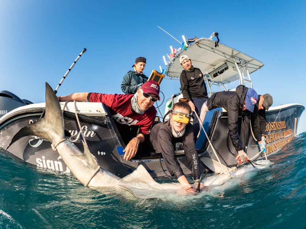 20200406-tracking-tiger-sharks-0001