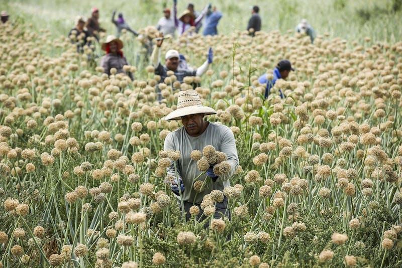 US NEWS COLORADORIVER-FARMERS 8 LA