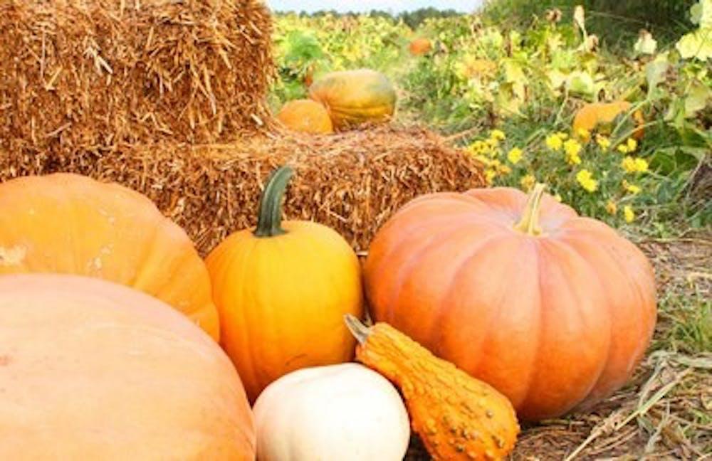 Farmer in the Dell Pumpkin Patch brings fall to Auburn
