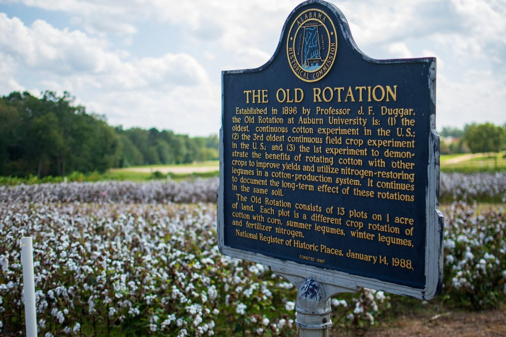 Old Rotation's annual cotton harvest to begin soon