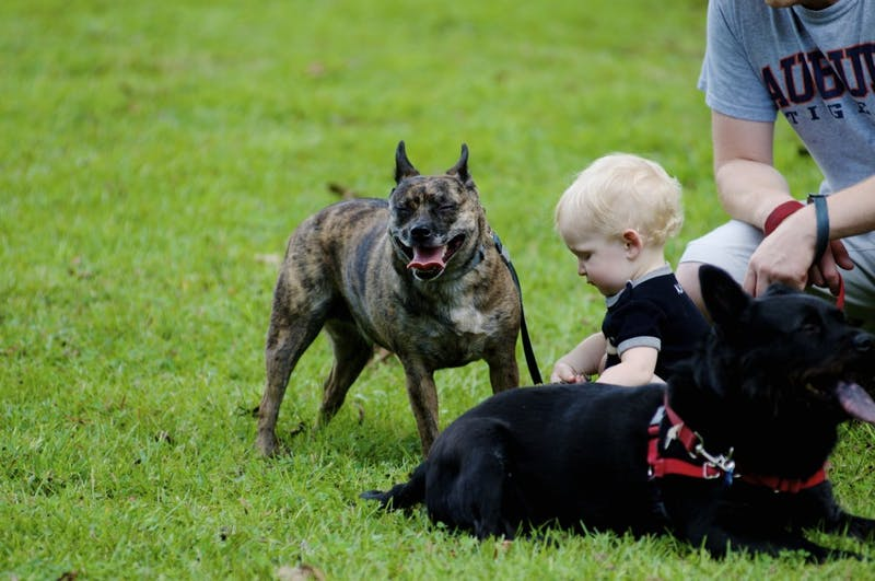 A baby plays with dogs during Puppy Palooza at Kiesel Park on Saturday, Sept. 23, 2017 in Auburn, Ala.
