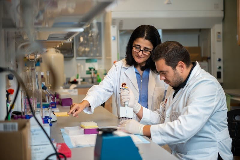 Dr. Amal Kaddoumi, left, a professor in Auburn's Department of Drug Discovery and Development, works in a lab with graduate research assistant Sweilem Al Rihani. Kaddoumi is leading a multi-disciplinary team in an investigation of oleocanthal, a molecule that appears naturally in extra-virgin olive oil, as a novel preventative treatment for such diseases as Alzheimer's or dementia.