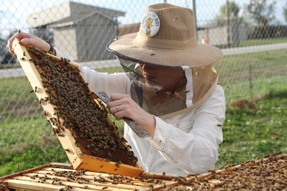 Beekeepers lost 40 percent of managed colonies over the last year