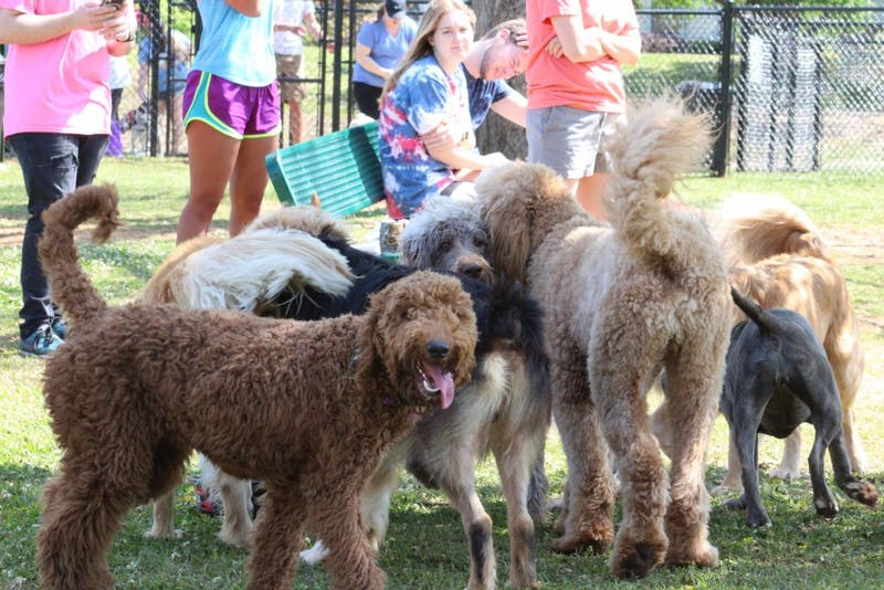 Several dozen dogs enjoyed running, playing and socializing together at the Opelika dog park on Saturday, April 14, 2018.