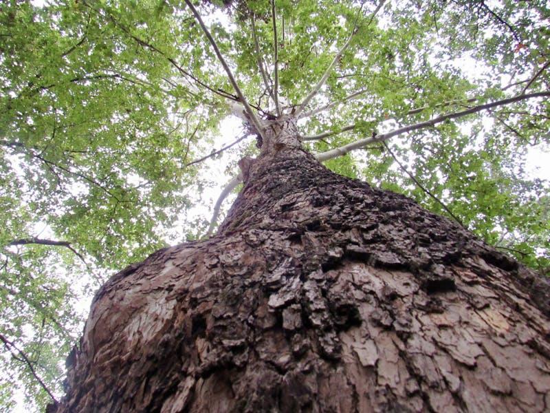 A tree at the Donald E. Davis Arboretum on Oct. 19, 2020, in Auburn, Ala.