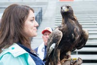 One of the Southeastern Raptor Center's eagles appears on the sideline with her handlerduring Auburn's A-Day game on Saturday, April 7, 2018, in Auburn, Ala.