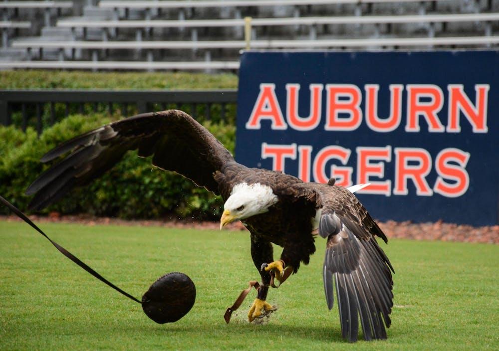 Bald eagle Spirit to make last pregame flight this fall