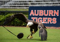 Spirit lands after a practice flight around Jordan-Hare Stadium on July 19, 2021, in Auburn, Ala.