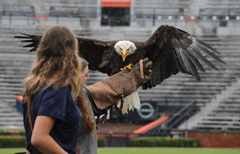 On July 19, 2021, bald eagles Spirit and Independence and golden eagle Aurea made practice flights around Jordan-Hare Stadium. The eagles are housed in the College of Veterinary Medicine's Southeastern Raptor Center and make flights around the stadium during pregame festivities at home football games. The University announced on Monday that Spirit will make her last pregame flight on Saturday, Nov. 13, against Mississippi State.