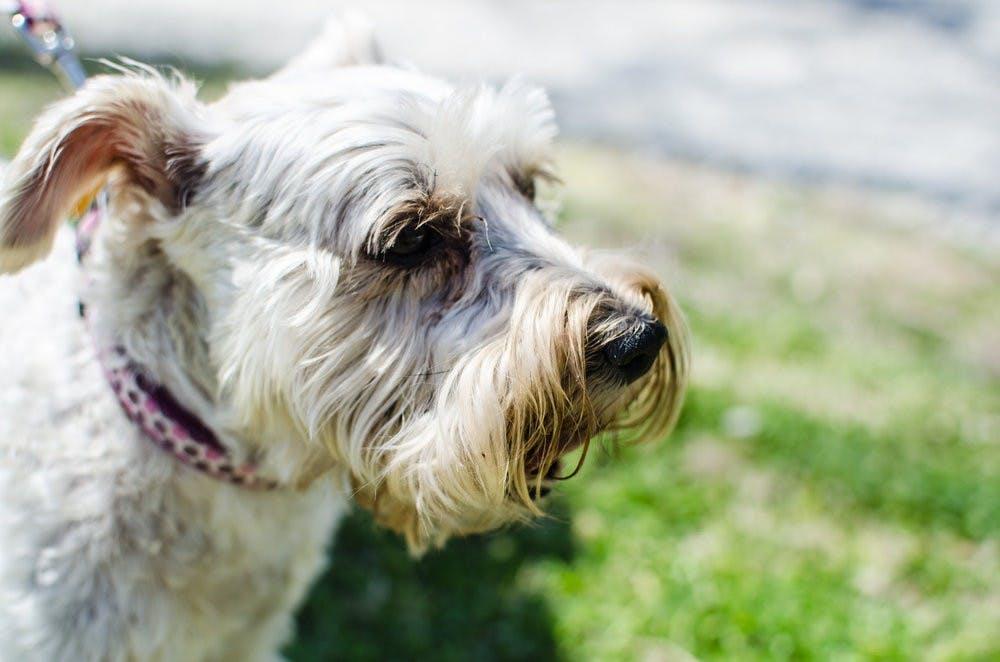 Auburn Parks and Recreation hosts Bark in The Park