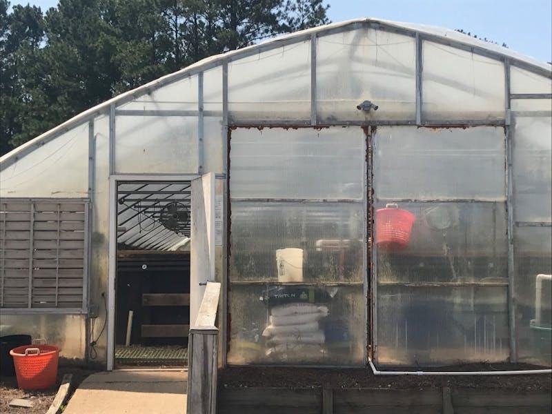 Auburn Foods: on-campus aquaponics program
