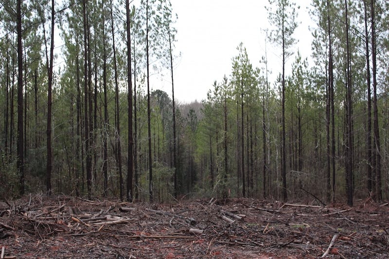 The location where Creekwood Resources wants to build its quarry, located 0.6 miles from the intersection of Lee County Road 168 and US Highway 431, south of Lee County Road 168, Opelika, AL.